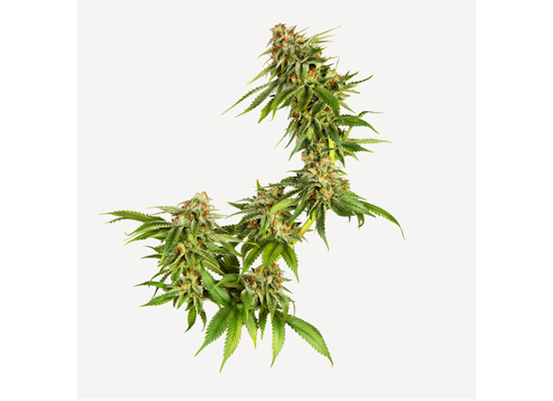 Discover the best online store to get high quality CBD Online